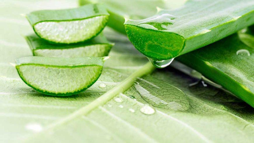 Aloe vera: antinfiammatorio e proprietà curative
