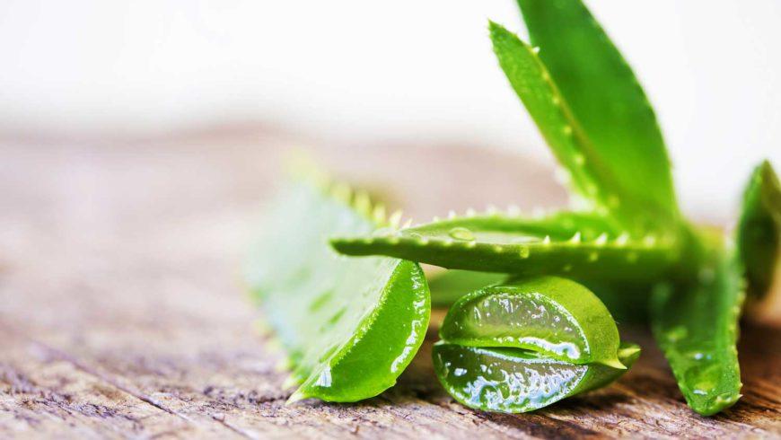Aloe Vera: succo e gel, vi sveliamo dove si trovano e quali sono le controindicazioni!