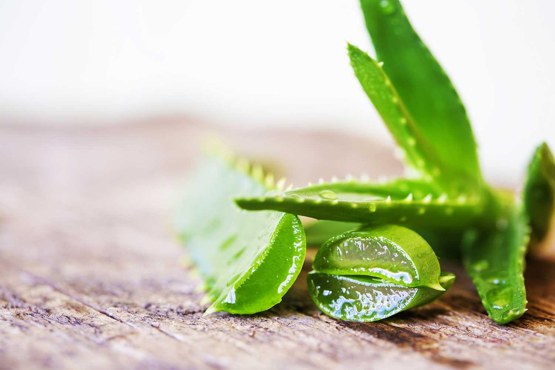 Aloe vera succo e gel propriet e controindicazioni for Tipi di aloe