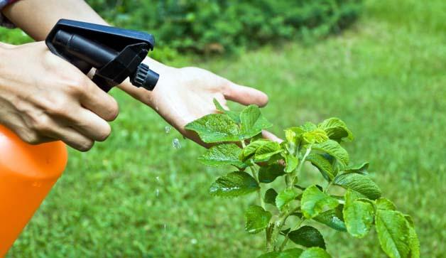 Antiparassitari naturali, ricette e curiosità